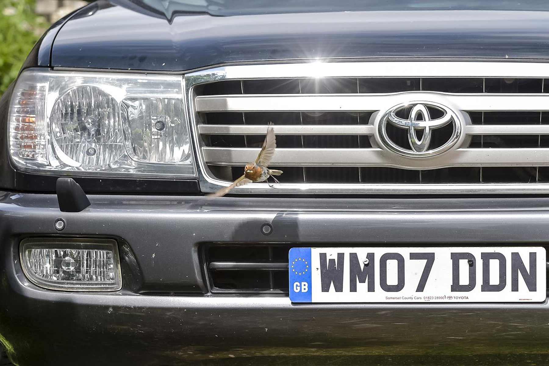 Toyota Land Cruiser Amazon Robin