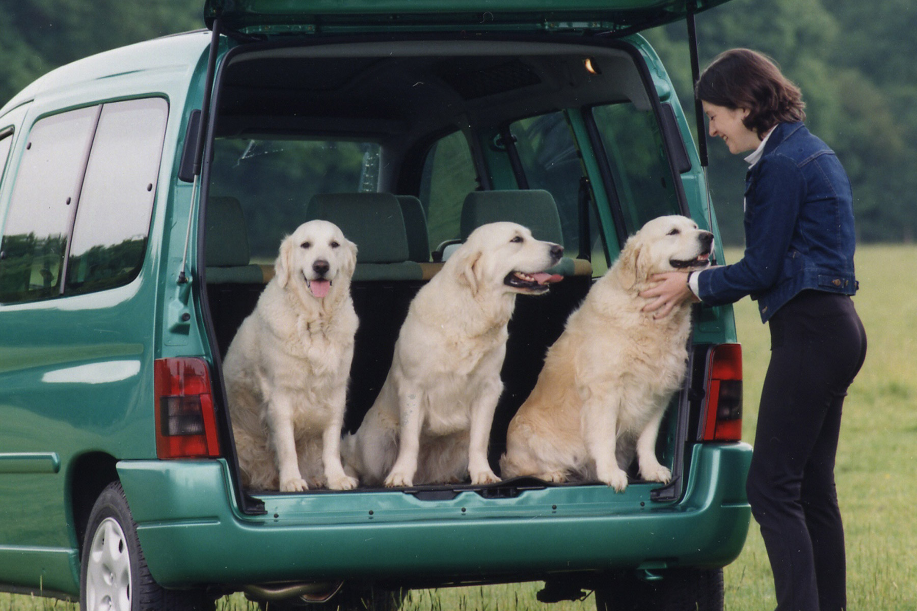 1: Dogs in Cars