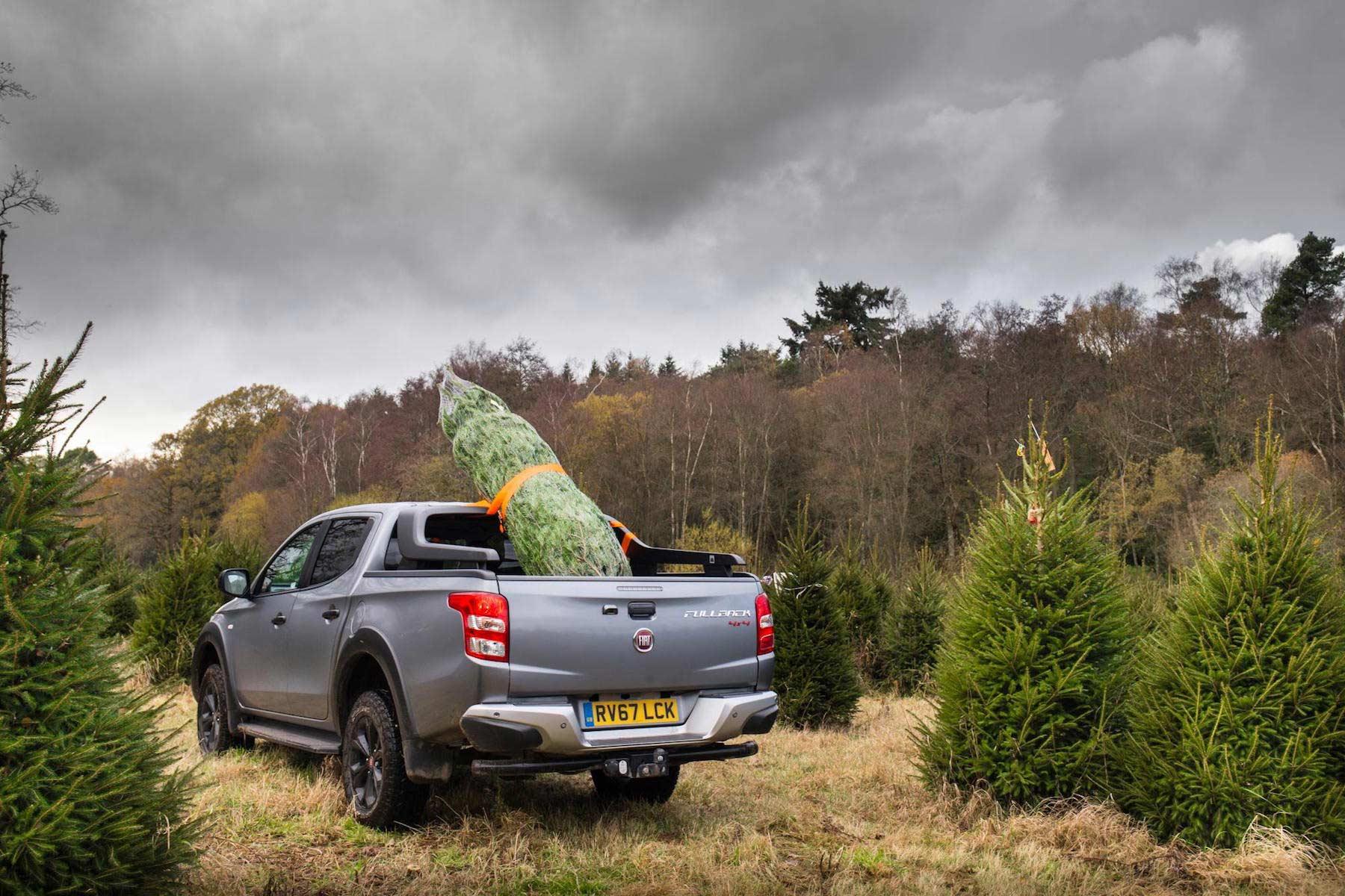 British drivers break law for Christmas tree