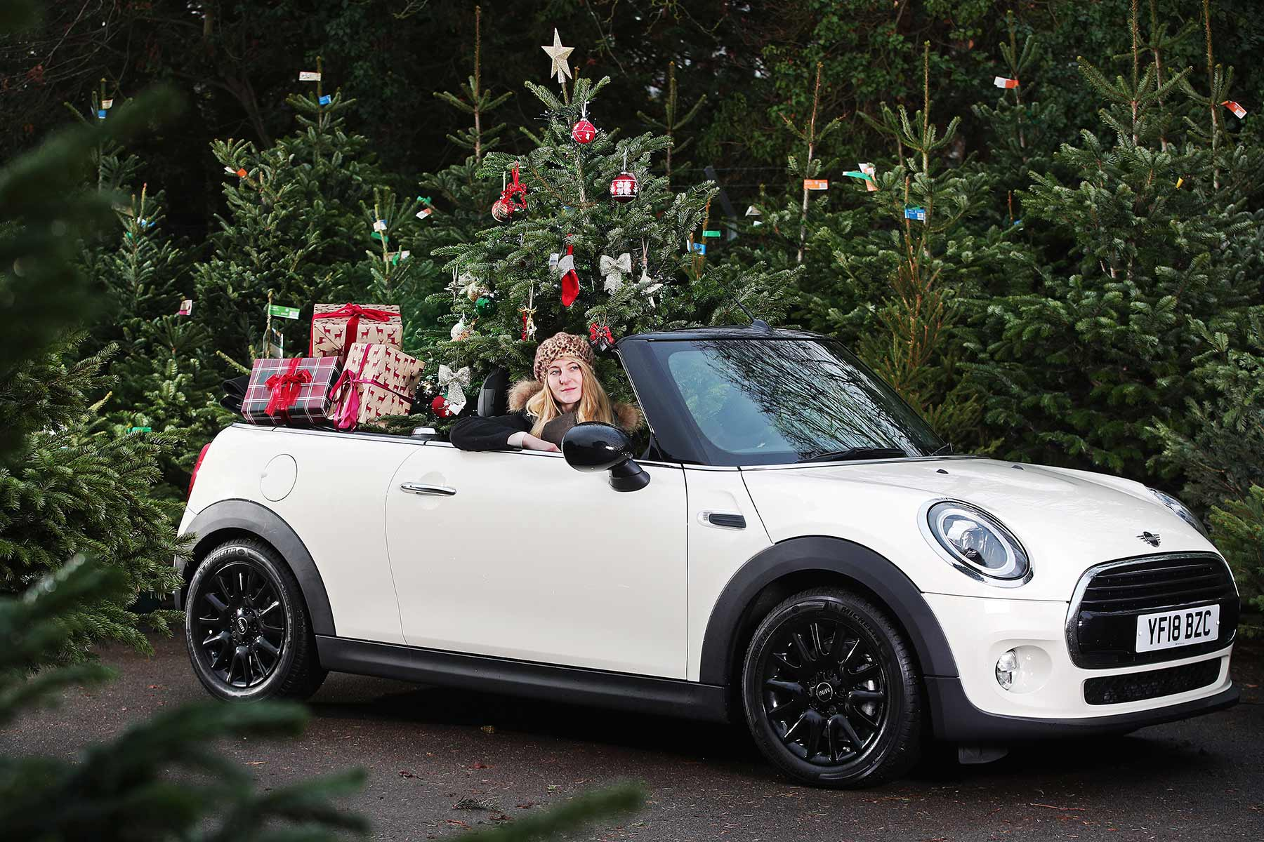 MINI Christmas Tree Transport Advice