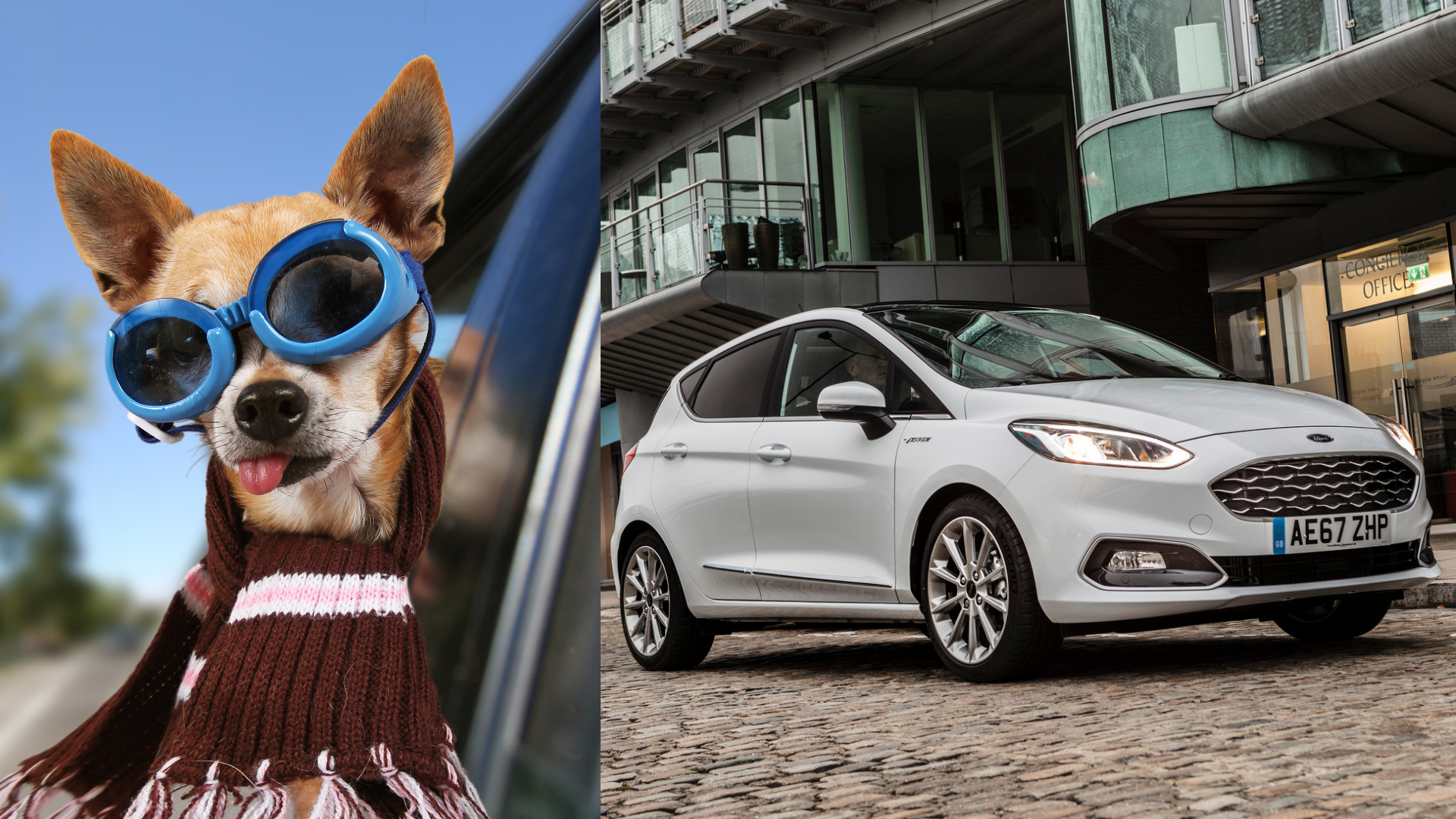 Dogs more expensive than cars on insurance