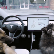Tesla dog mode sentry mode