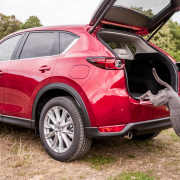 Dog owners Mazda CX-5 Auto Trader