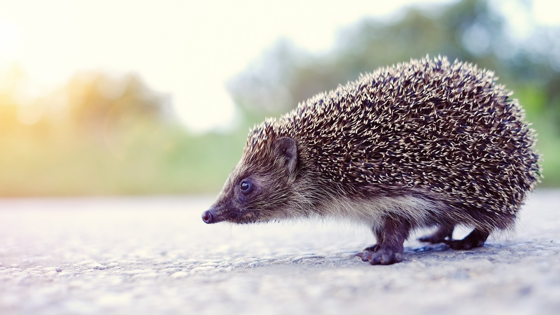 New road signs to help reduce wildlife collisions