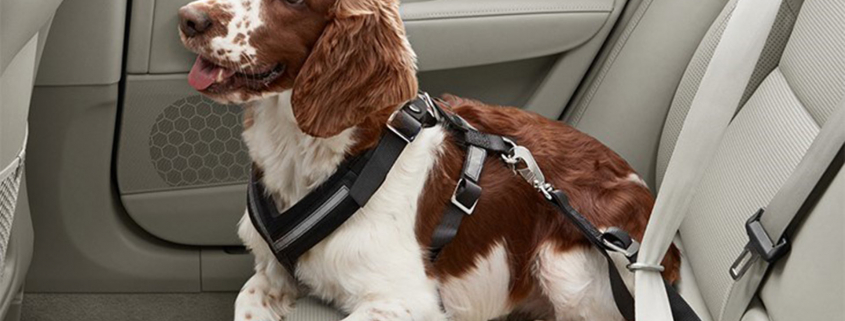 Danger of unrestrained pets in cars