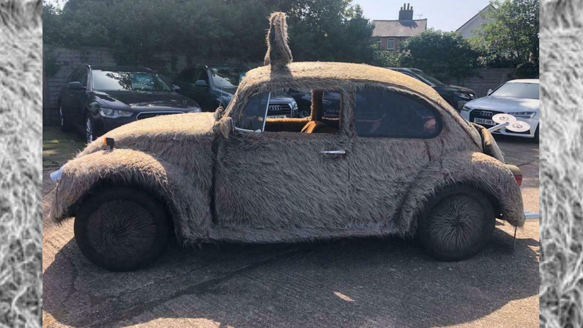 Furbie Beetle