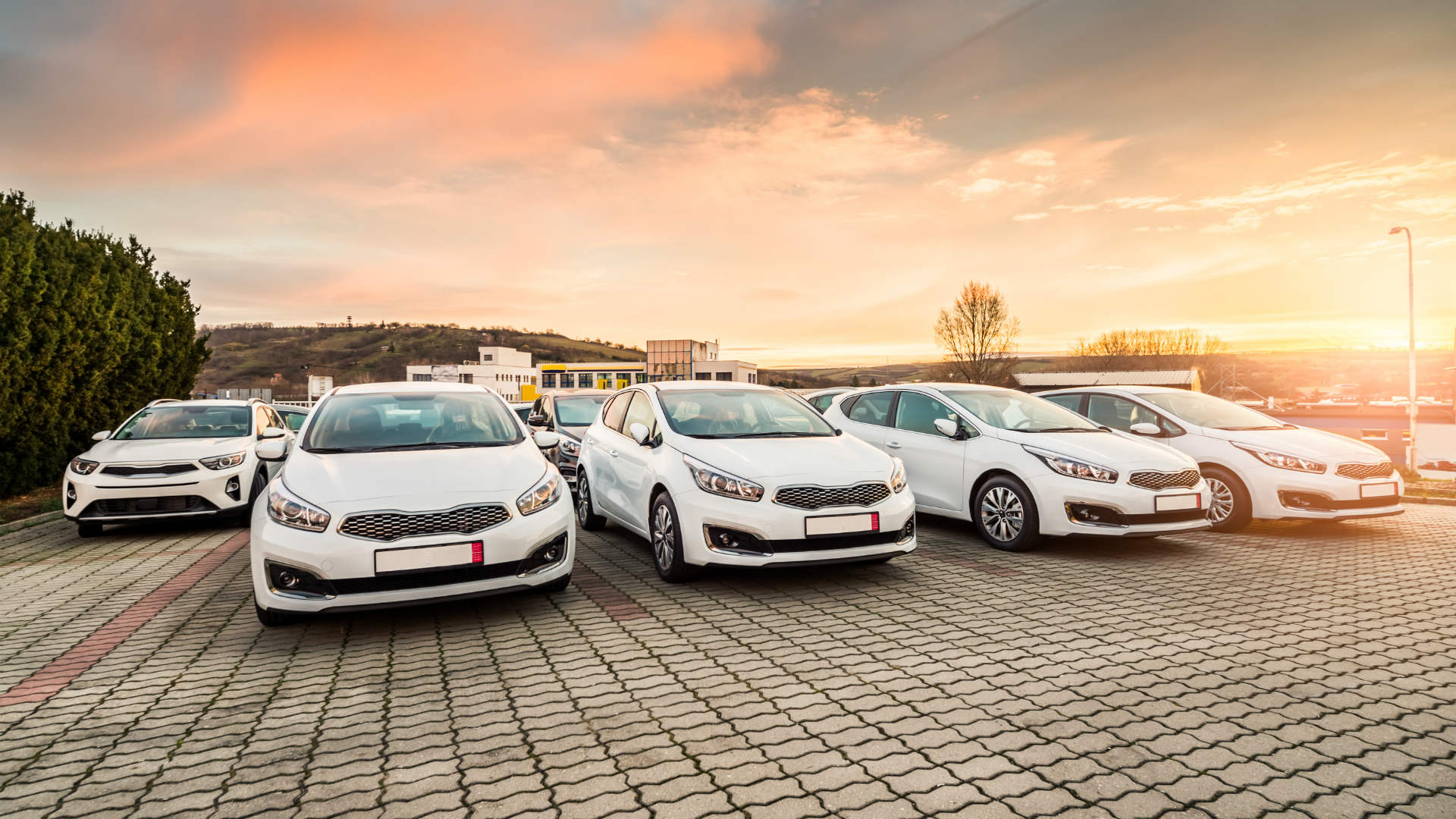 White cars are most popular