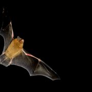 A BBC investigation has found that seven bat bridges over a new road in Norwich aren't working. The controversial bridges cost £1 million.