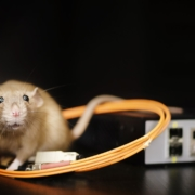 Ecotricity car charger rat problem