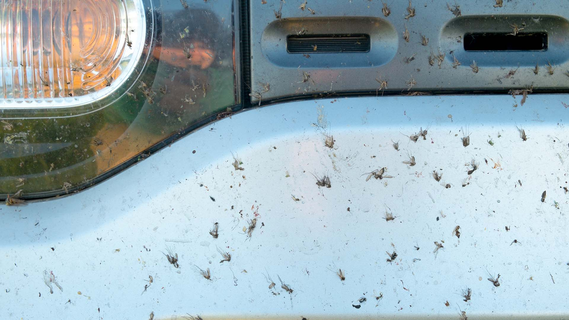 Fewer insects found on front of cars