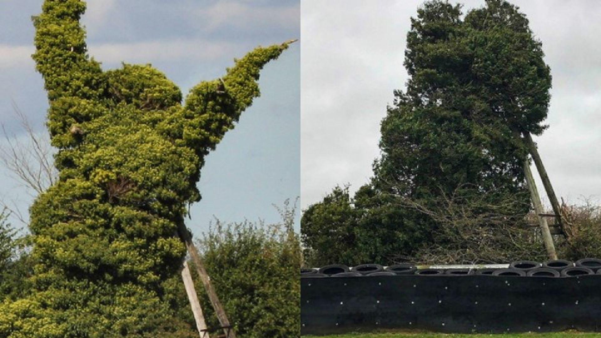 Storm Ciara Snetterton scary tree
