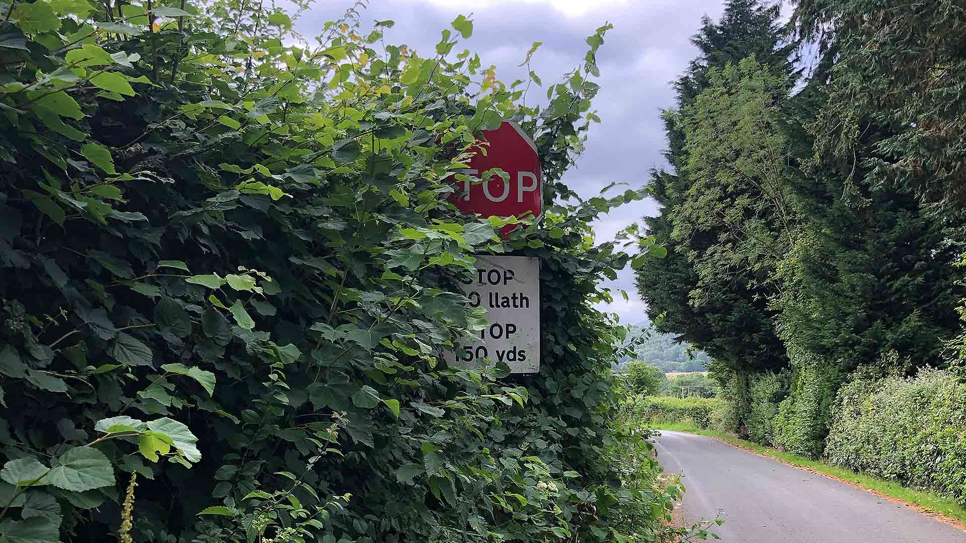 Obscured Stop sign on a rural road